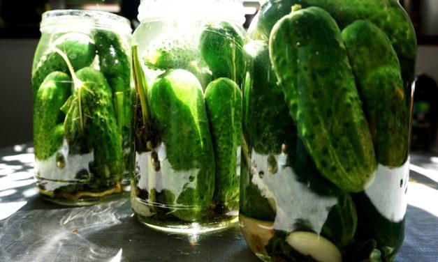 Semi-pickled cucumber (Lightly salted cucumber)